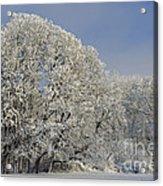 Winter In Oregon Acrylic Print