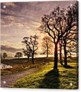 Winter Morning Shadows / Maynooth Acrylic Print