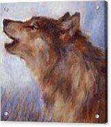 Wolf Whistle Acrylic Print