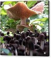 World Of Mushroom Acrylic Print