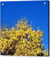 Yellow Autumn Tree Acrylic Print