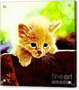 Yellow Kitten Acrylic Print