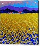 Yellow Meadow Acrylic Print by John  Nolan