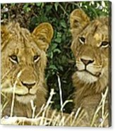 Young Brothers Acrylic Print