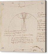 Drawings By Leonardo Da Vinci Acrylic Print