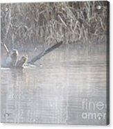 Northern River Otter Acrylic Print