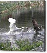Wildlife Acrylic Print
