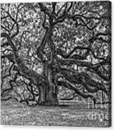 Angel Oak Tree In Black And White Acrylic Print