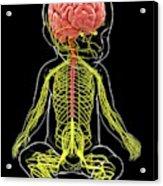 Baby's Nervous System Acrylic Print