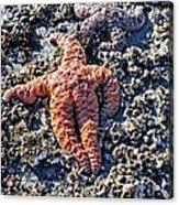 Yachats Oregon Acrylic Print
