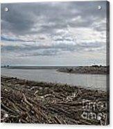 Driftwood On The Beach Acrylic Print