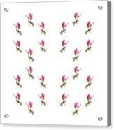 24 Dancing Pink Magnolias Square Acrylic Print