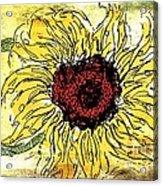 24 Kt Sunflower - Barbara Chichester Acrylic Print