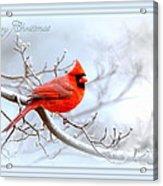 2559-1 Cardinal Acrylic Print