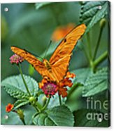 3 2 1 Prepare For Butterfly Liftoff Acrylic Print