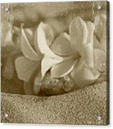 Aloha'lani Pua Melia Lei Manakai Acrylic Print