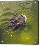 Anhinga Or Snake Bird Acrylic Print