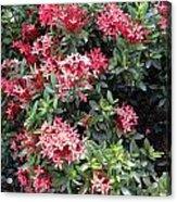 Antigua Flowers Acrylic Print