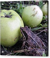 3 Apples And A Frog Acrylic Print