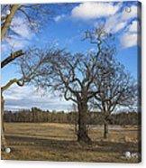 3 Appleton Trees Acrylic Print