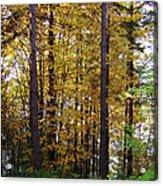 Autumn 5 Acrylic Print