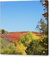 Autumn Colors In Maine Blueberry Field And Forest Acrylic Print