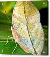Autumn Leaf Butterfly Acrylic Print