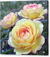 3 Beautiful Yellow Roses Acrylic Print by Jo Ann
