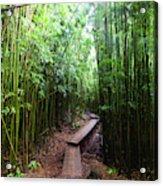Boardwalk Passing Through Bamboo Trees Acrylic Print