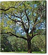 Bok Tower Gardens Oak Tree Acrylic Print