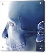 Bones Of The Face Acrylic Print