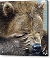 Brown Bear Acrylic Print