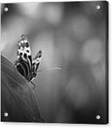 Butterfly Black And White Acrylic Print