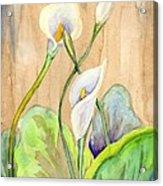3 Calla Lilies Acrylic Print