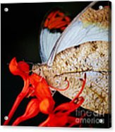 Colorful Portrait Of A Butterfly  Acrylic Print