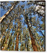 Dandenong Forest Acrylic Print