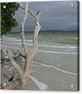Driftwood On The Beach Acrylic Print
