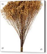 Dry Flowers Bunch Acrylic Print