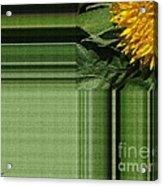 Dwarf Sunflower Named Teddy Bear Acrylic Print