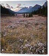 Engadine Meadow Acrylic Print