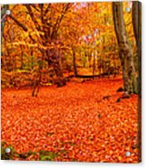 Epping Forest Hrd Version Acrylic Print