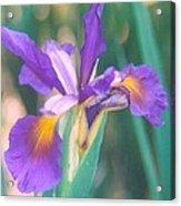Exotic Iris Acrylic Print