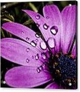 Flower Acrylic Print by Amr Miqdadi