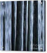 Forest Acrylic Print by Bernard Jaubert
