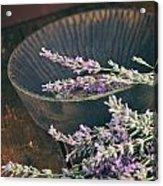 Fresh Lavender Acrylic Print