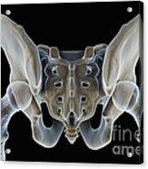 Hip Bones Male Acrylic Print