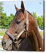 Horse On A Farm  Acrylic Print