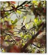 Hummingbird In Spring Acrylic Print