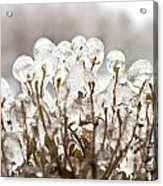 Ice On Branches Acrylic Print