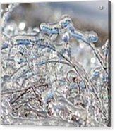 Ice Storm Alfalfa Acrylic Print